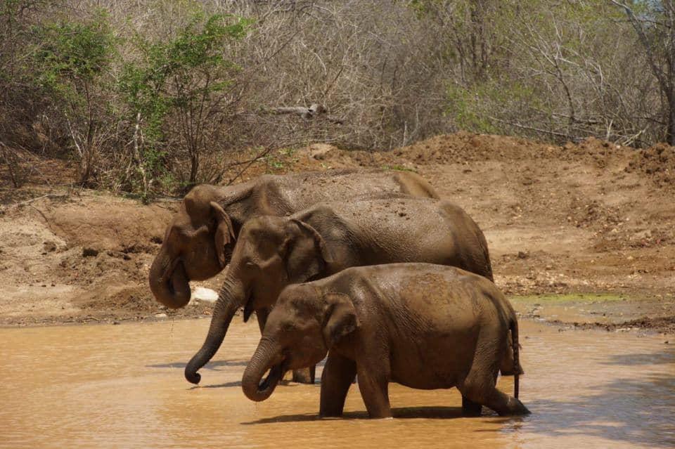 Elephant Safari at Udewalawe National Park