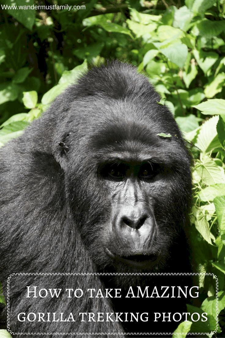 How to take amazing gorilla trekking photographs