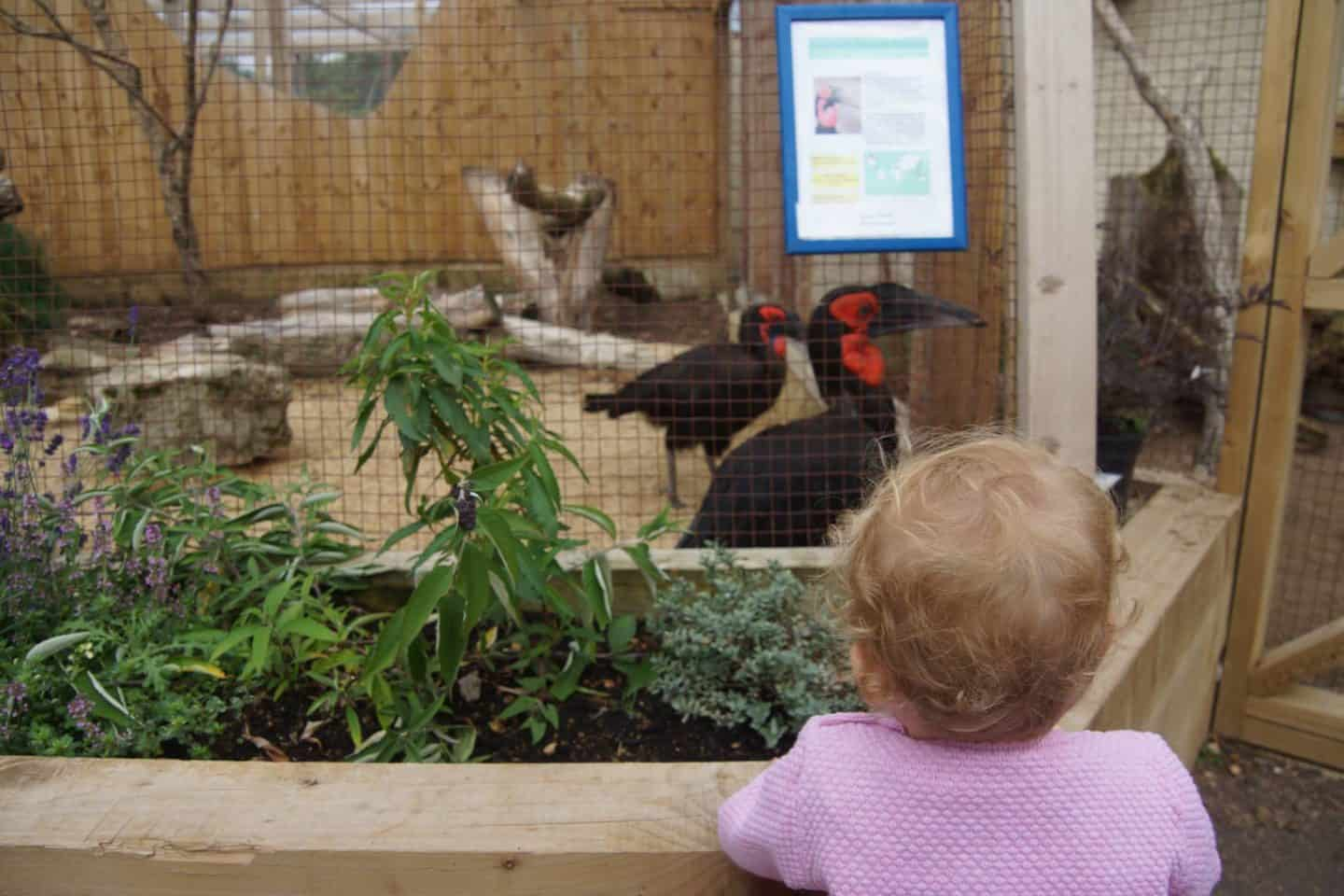 What to do in Bourton on the Water and birdland with kids