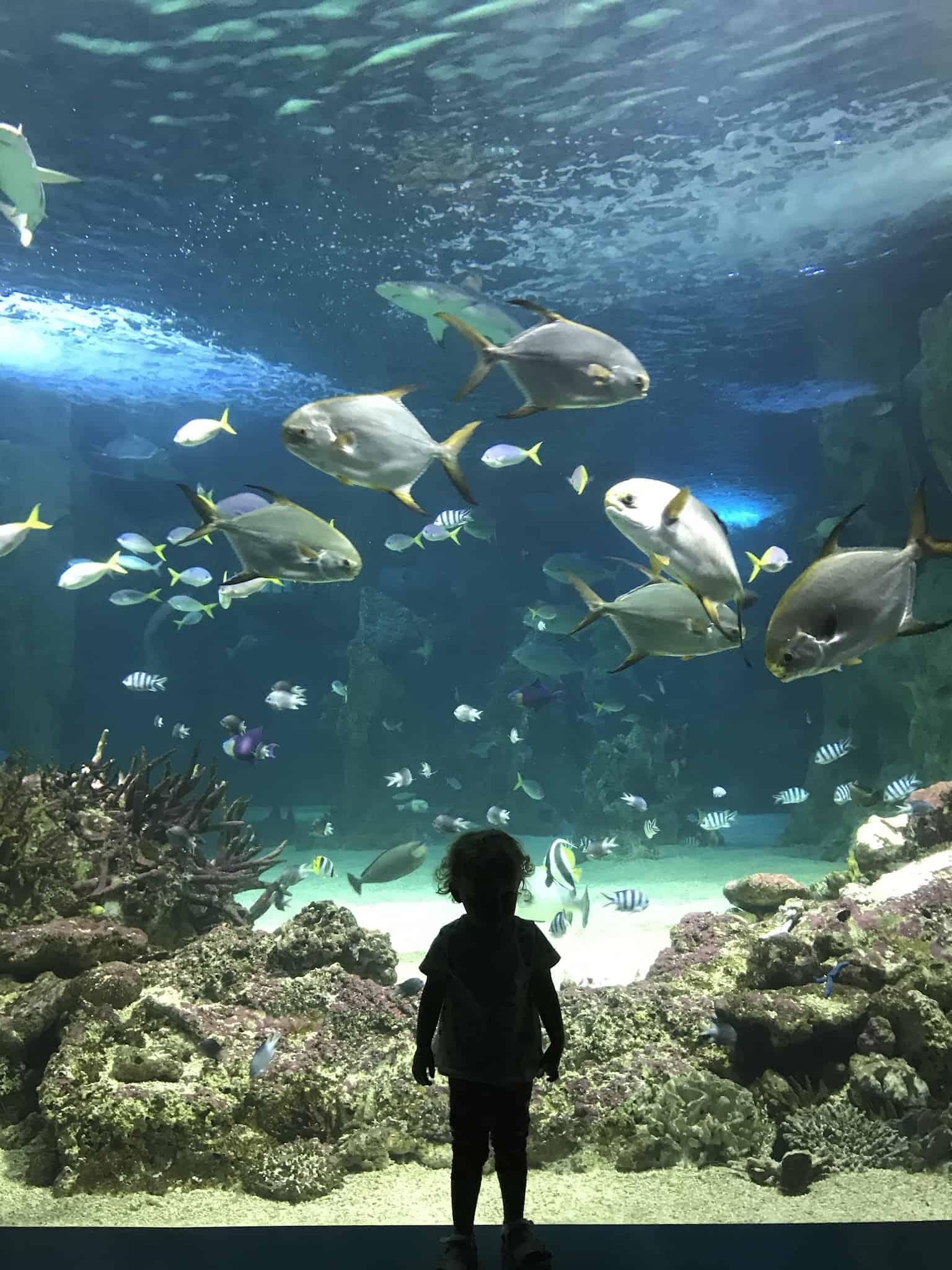 Sealife Sydney
