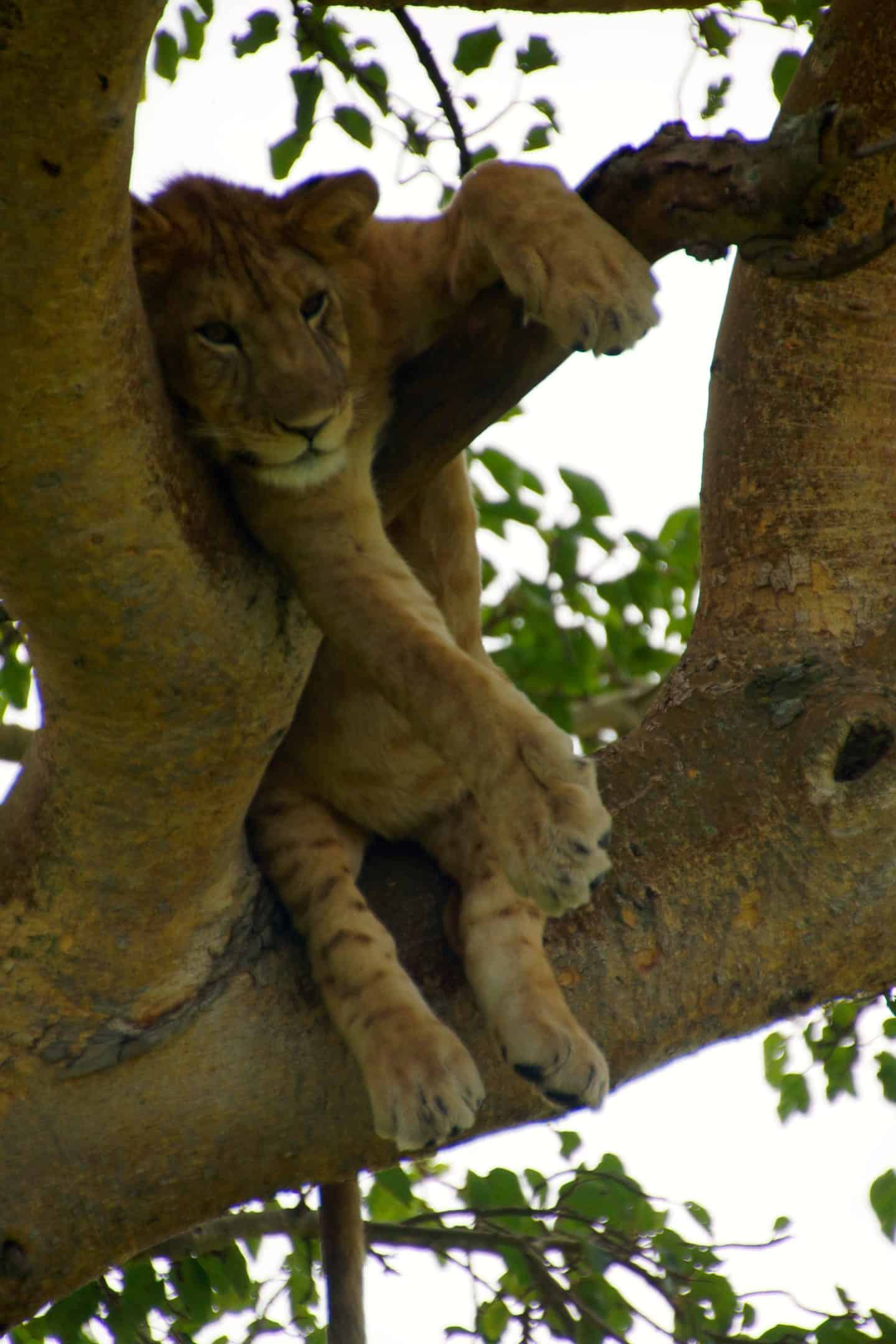 Once in a Lifetime Wildlife Destinations
