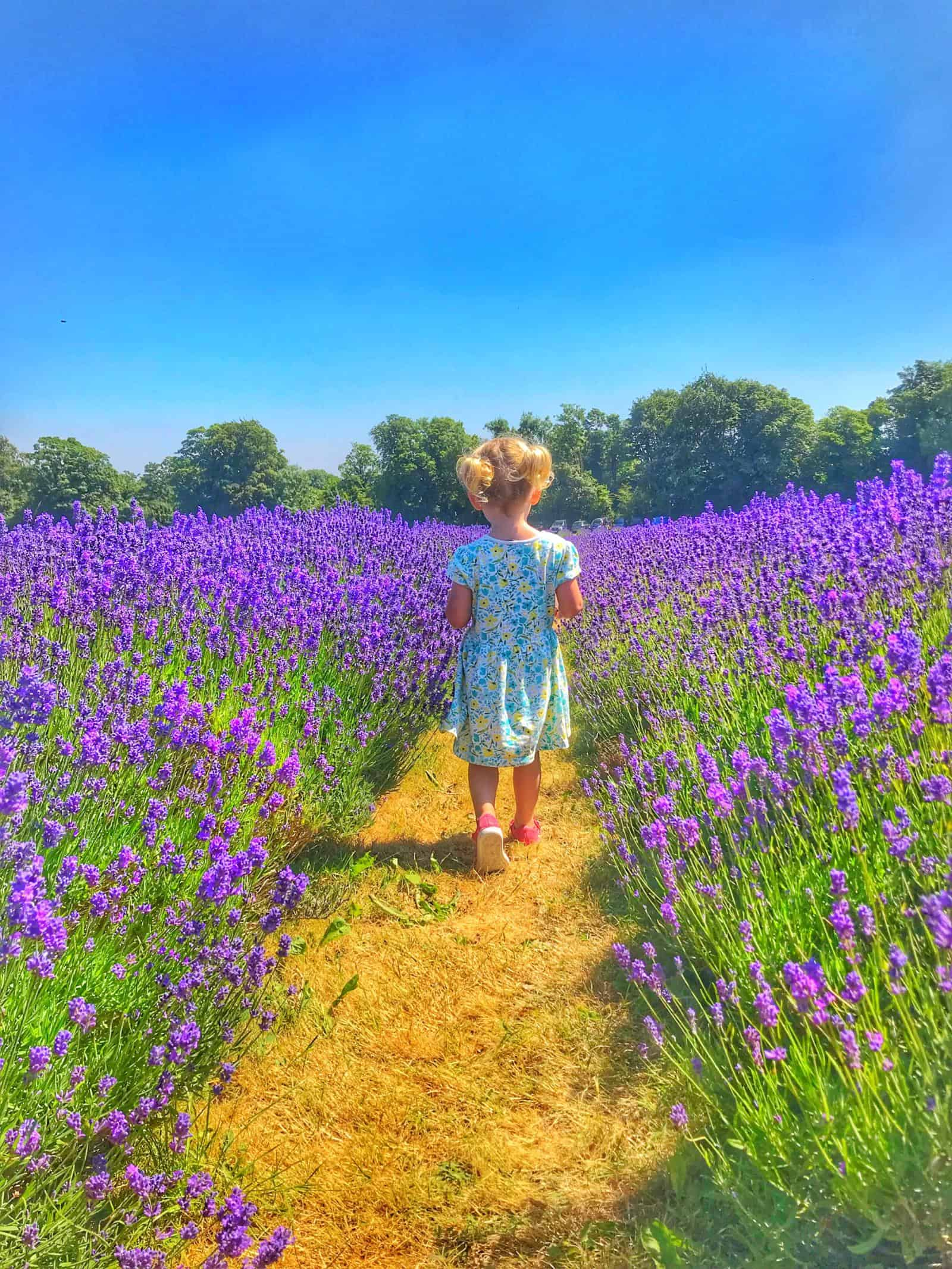 Mayfield Lavender - Best Day Trips from London with Kids