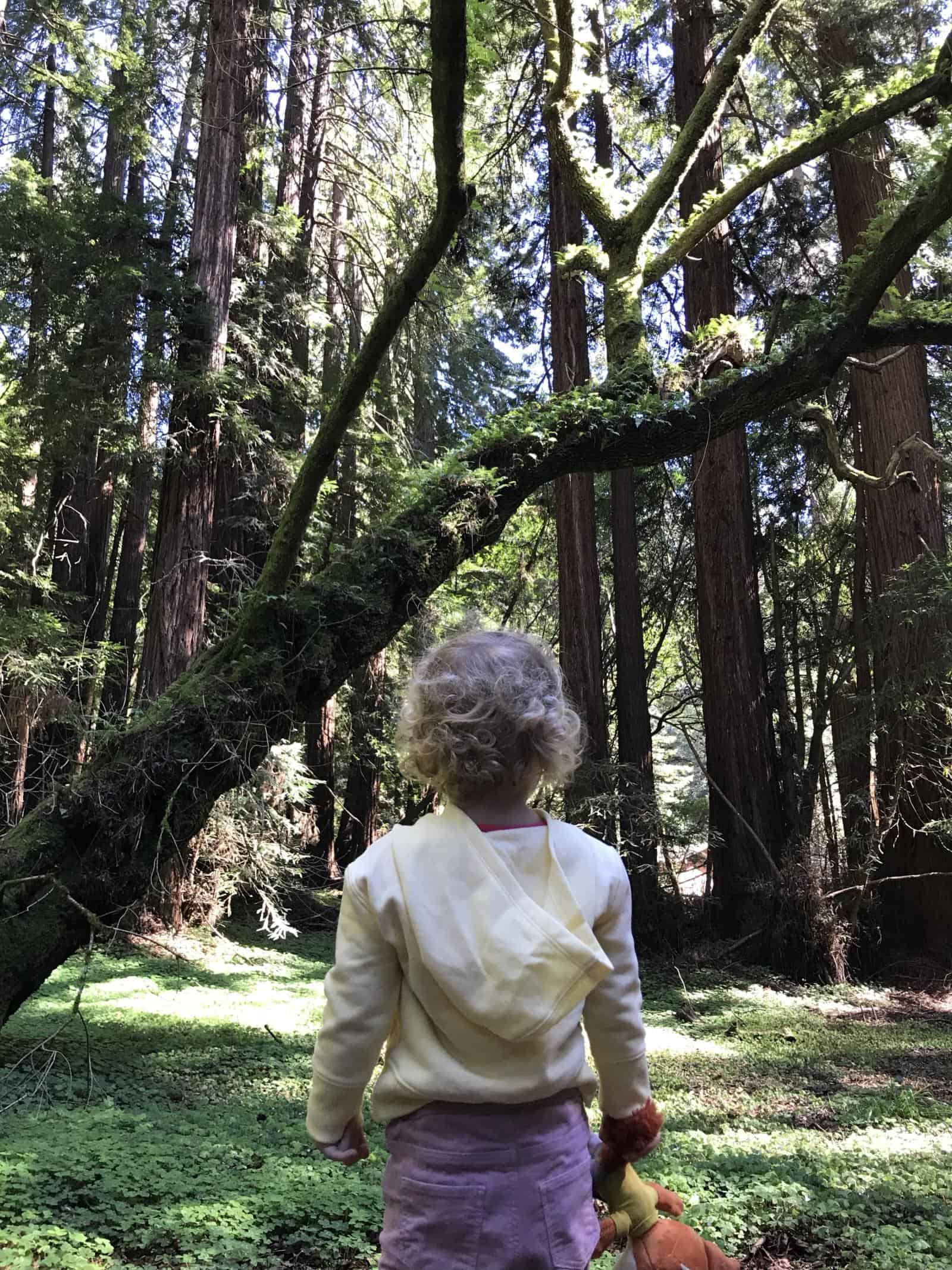 Visiting Muir Woods with Kids