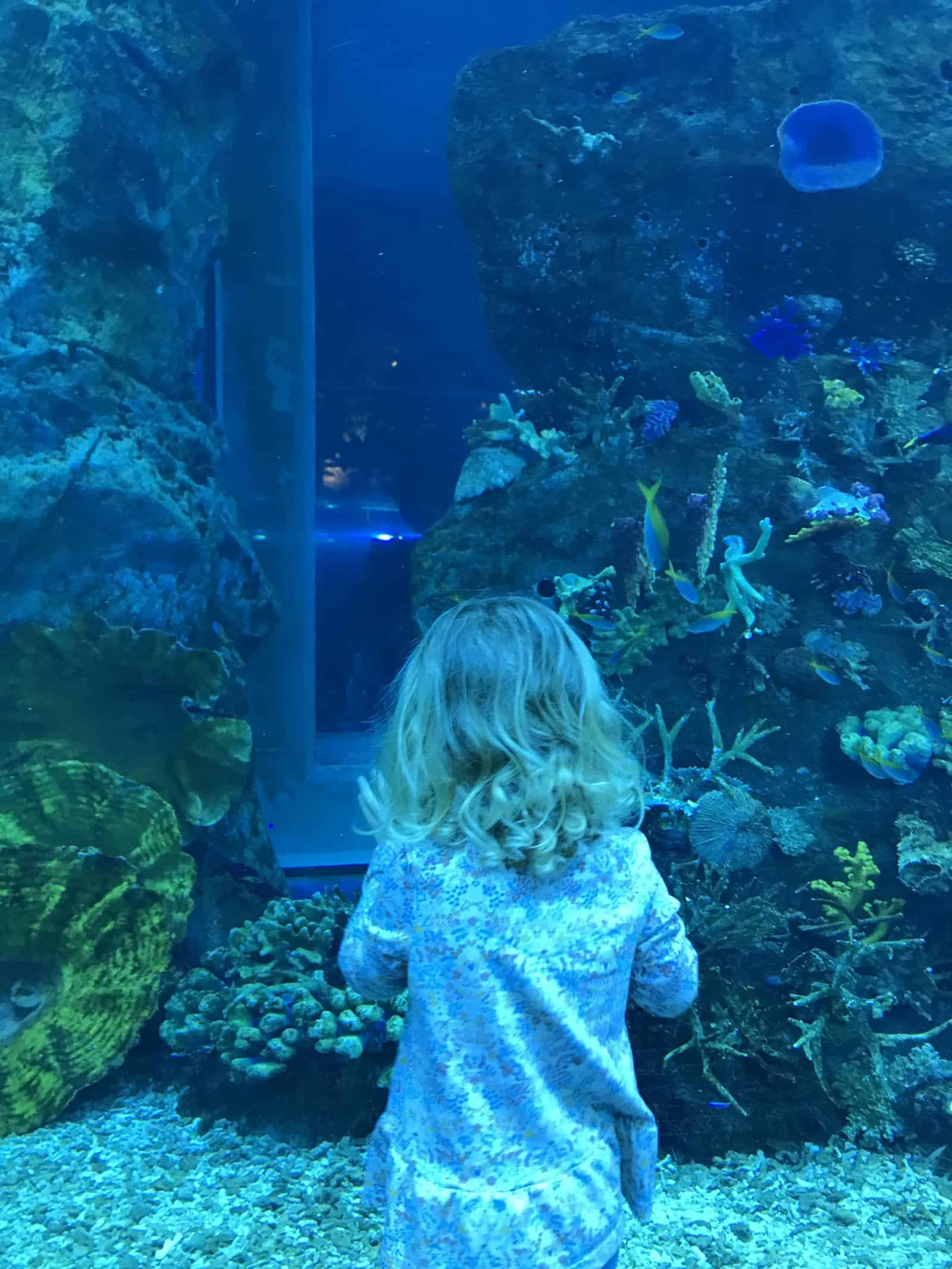 Dubai Aquarium - best things to do in dubai with toddler and baby. Best thing to do in dubai for toddlers.