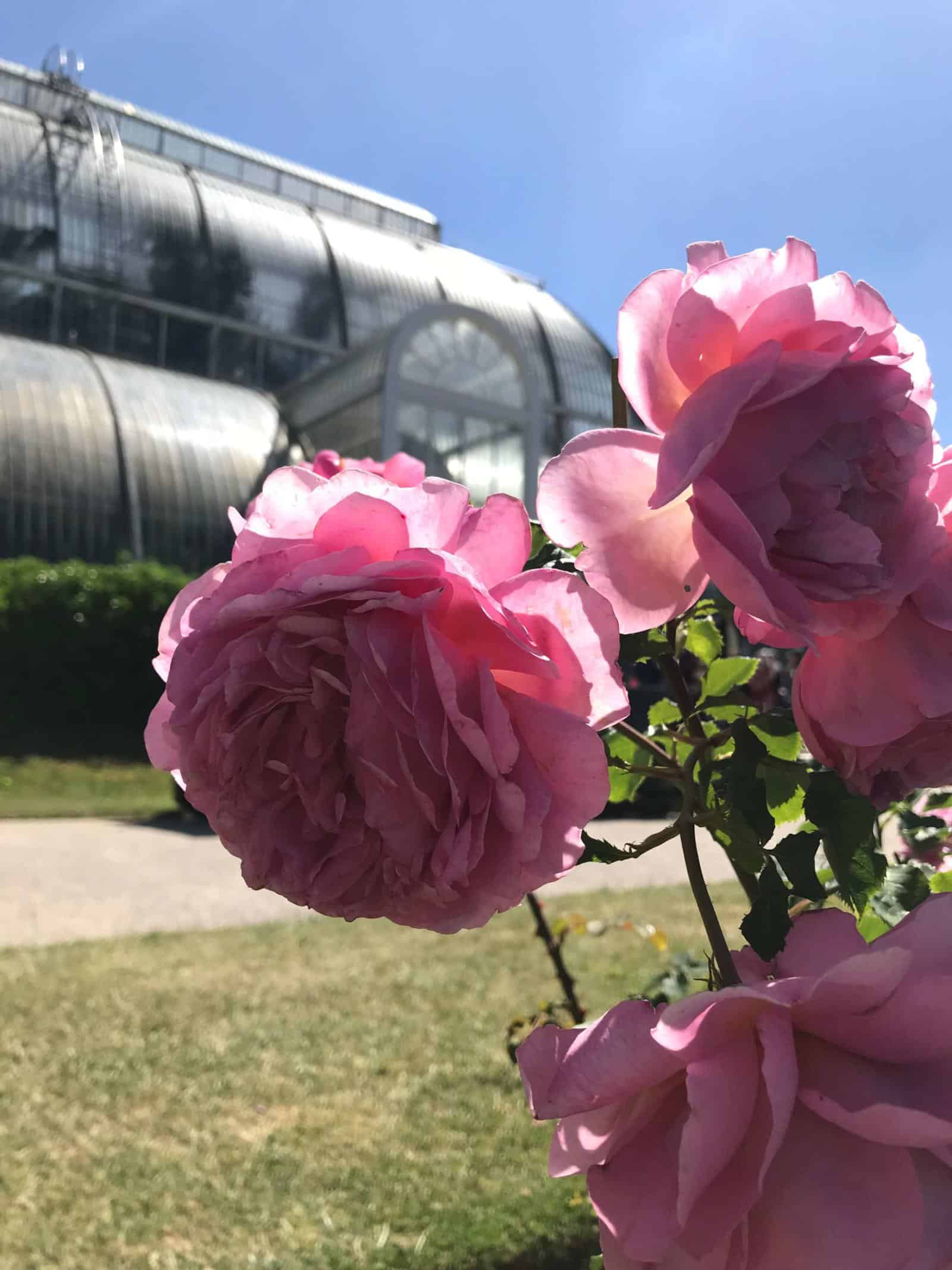 The Most Beautiful Rose Gardens In England Wandermust Family