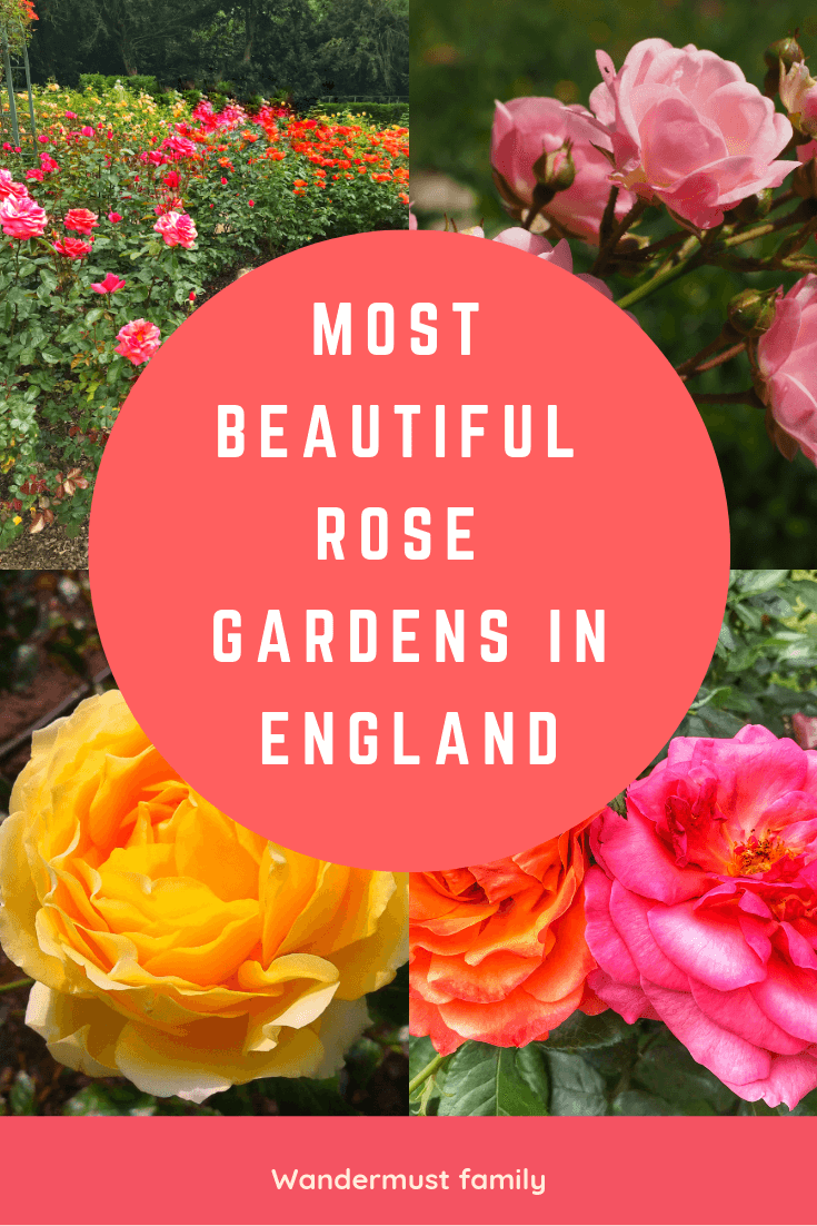 Most Beautiful Rose Gardens in England  #rosegarden #englishrose #englishcountryrosegarden #gardening #gardenersworld #visitengland #englandtravel