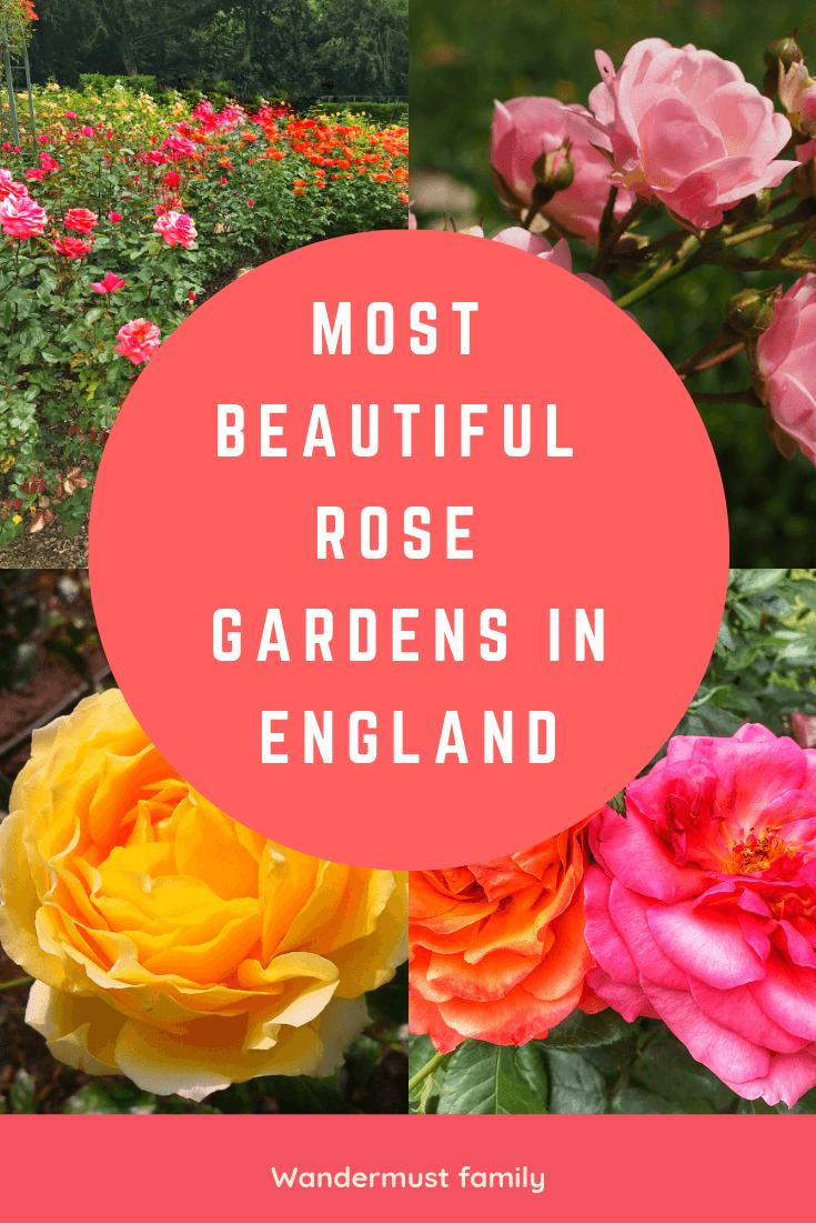 Most Beautiful Rose Gardens in England  #rosegarden #englishrose #englishcountryrosegarden #gardening #gardenersworld #visitengland #englandtravel
