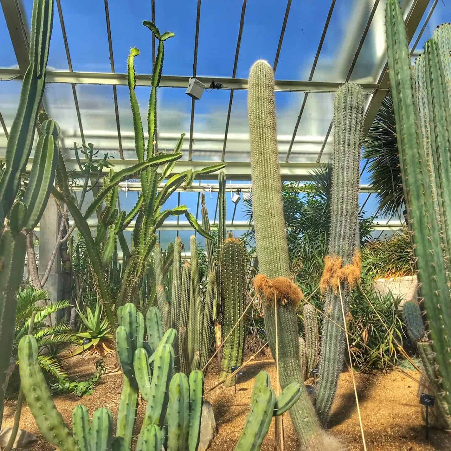 Best things to do at Kew Gardens with kids (or without)