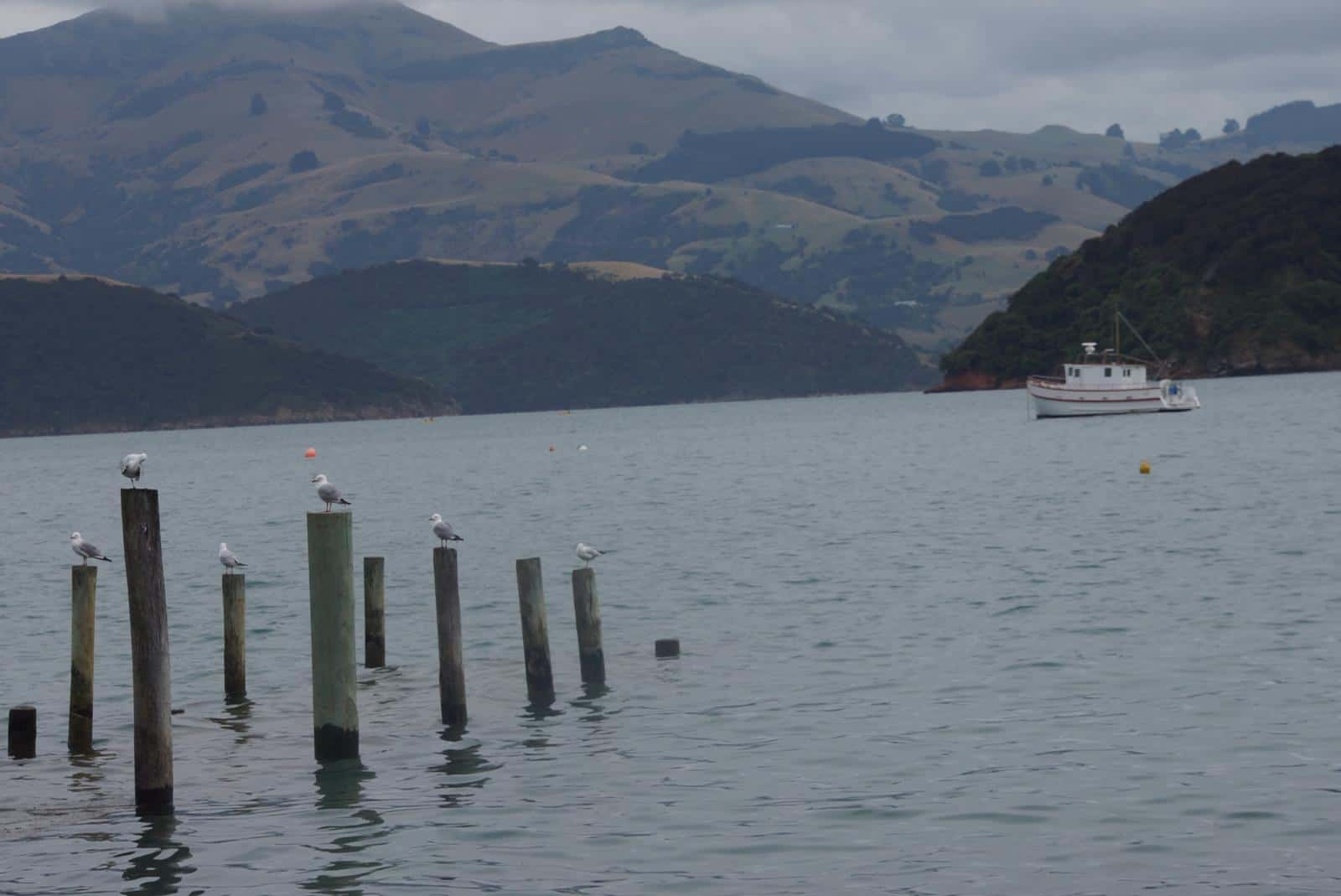 Best Things to Do in Akaroa New Zealand - Akaroa Day Trip from Christchurch