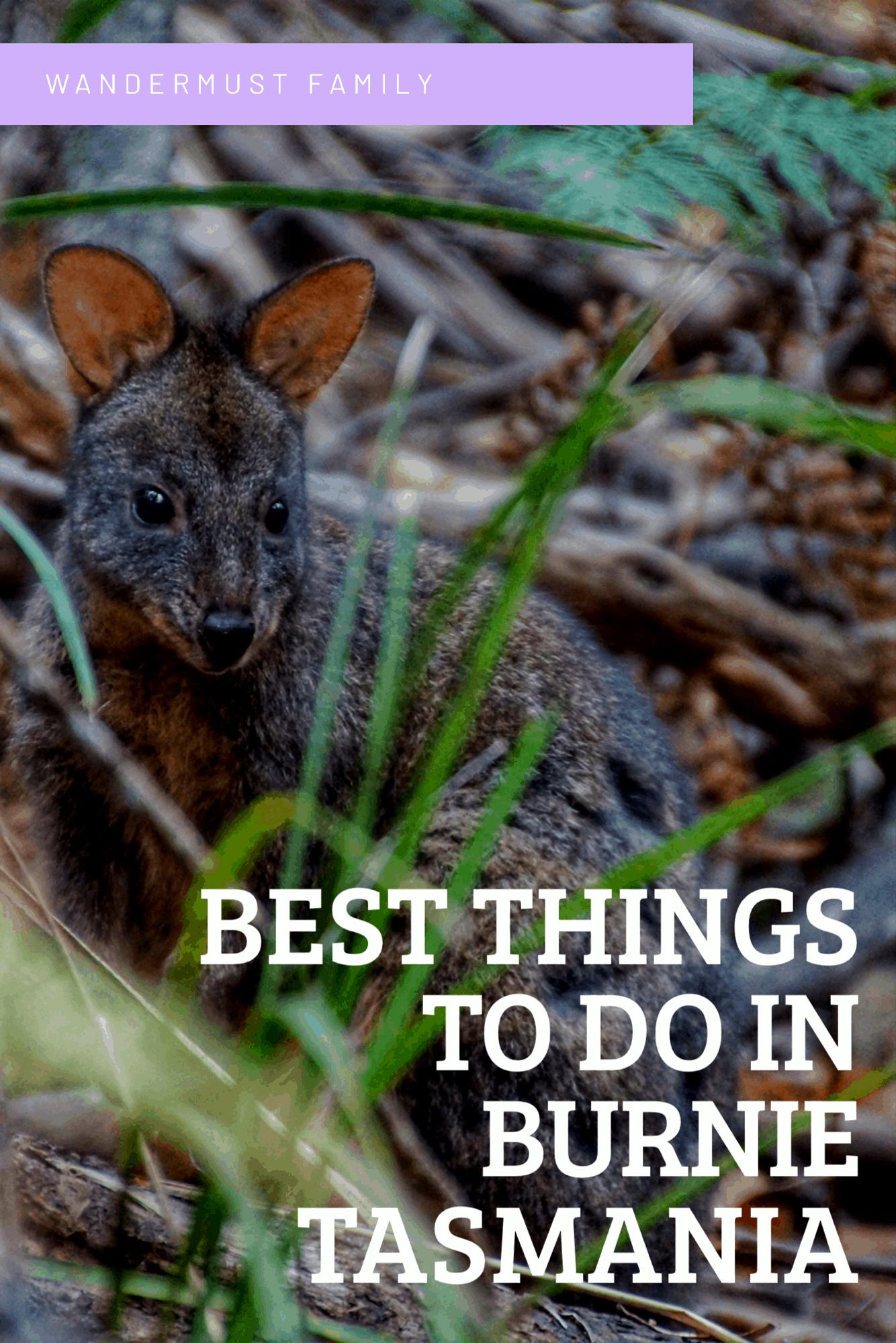 Best things to do in Burnie Tasmania including fernglade #tasmania #burnie #burnietasmania #visittasmania #tasmaniatravel #fernglade