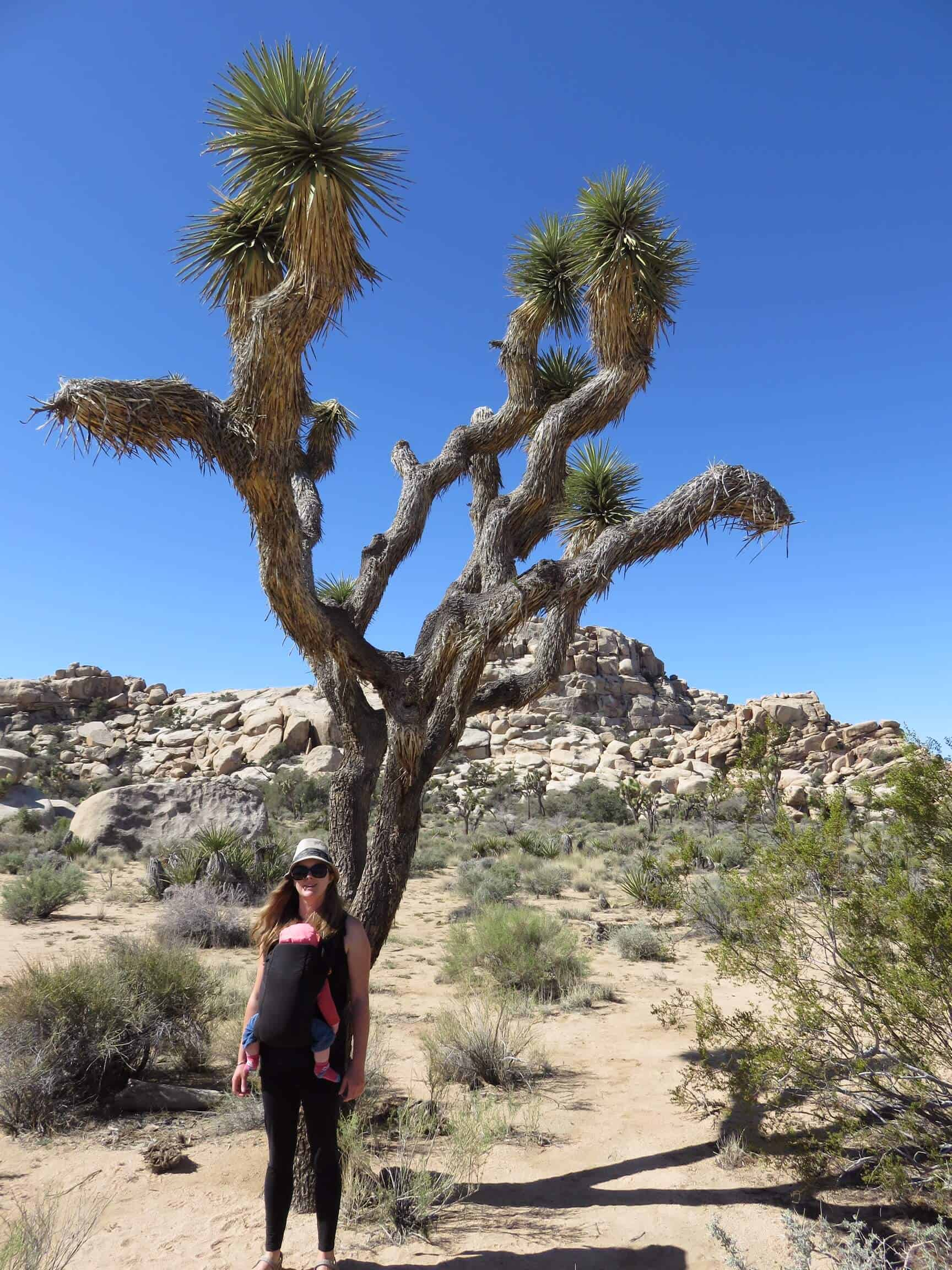 Visiting Joshua Tree National Park with toddlers