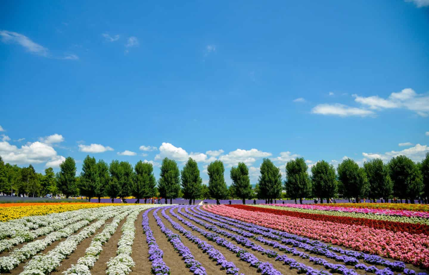 What is the Best Time to Visit Hokkaido?